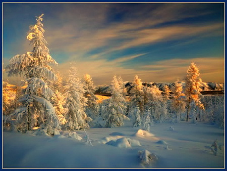 January morn - sunrays, golden hue, snow, morning, blue sky, trees, winter