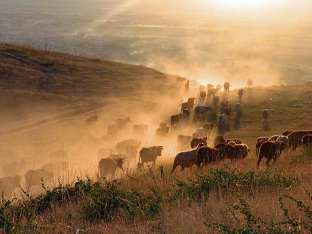 Livestock Deserts Nature Background Wallpapers On Desktop Nexus Image 558225