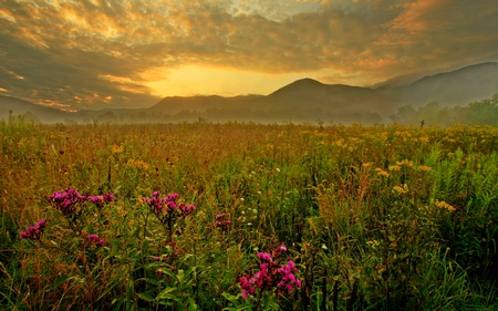 SPRING FIELD - flowers, sunset, grass, fiels, clouds, spring, green, mountain