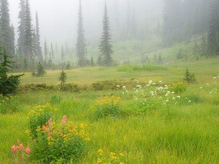 Meadows in the Sky Revelstoke National Park British Columbia Canada - meadows-in-the-sky-revelstoke-national-park-british-columbia-can