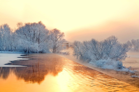 Gold shimmer - trees, mist, golden sky, winter, cold, water, snow, reflections, frost