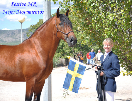 My Number One - andalusian, bay, horses, spanish, award