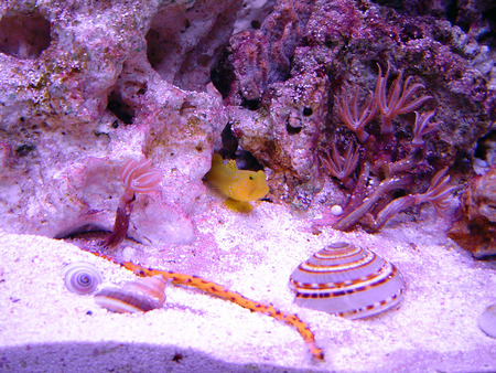 Underwater scene - underwater, rock, fish, sea shells, ocean, yellow, reefs, sand, purple, shells