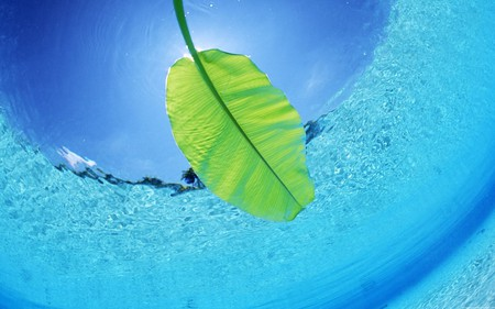 leaf - green, ocean, blue, leaf