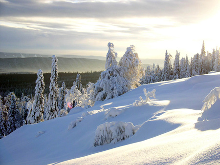 Siberian Winter - snow, russia, siberia, winter