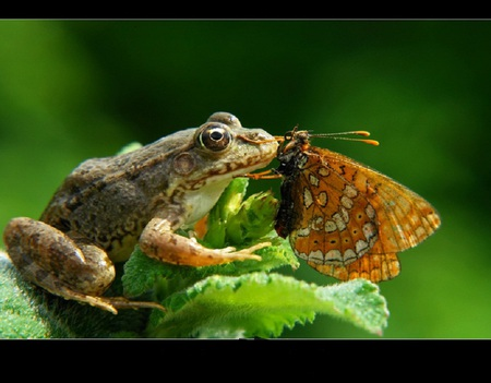 Best friends - wings, butterfly, amphibian, kissing, frog, friends, eyes, cute, green, leaves