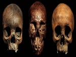 Dayak Carved Trophy Skulls