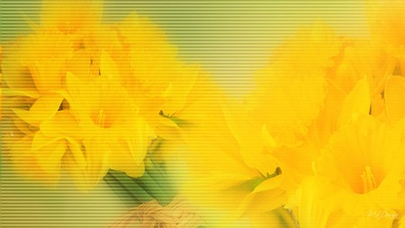 Spring Sunshine - daffodils, blur, yellow, easter, spring, abstract, floral, flora, flowers