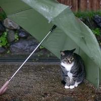 pussy under the umbrella