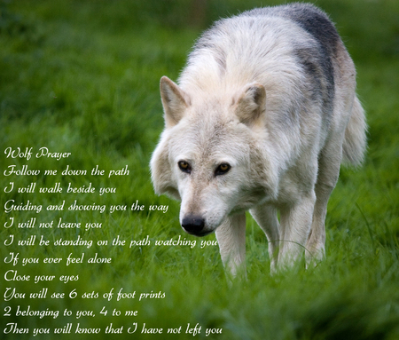 Wolf prayer - wolves, wolf, native american, prayer