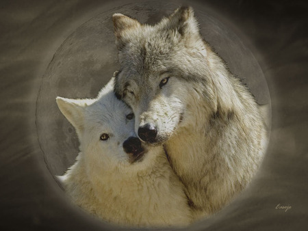 Wolf Love - dogs, forest, wolf, animals, wolves, nature, dog