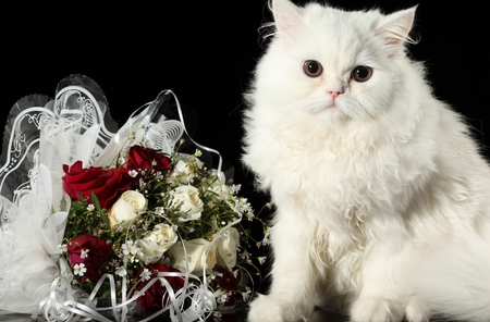 Adorable Cat - kittens, white, valentines day, eyes, cute, sweet, animals, white roses, kitty, flowers, romance, still life, white cat, kitten, photography, cats, face, romantic, roses, red, rose, red roses, white rose, cat face, cat, adorable, nature, beauty, beautiful, lovely, bouquet, pretty, red rose, paws