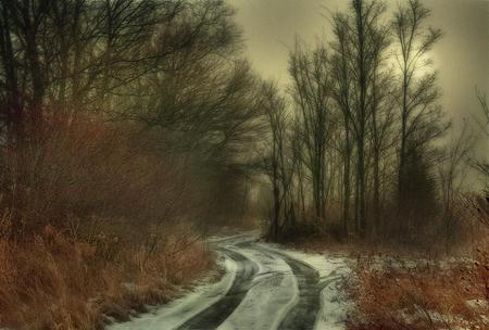 THE PATH - snow, woods, path, trees, fog