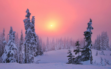 Pink Winter - pink, afternoon, sun, winter, fog, pines, paysage, cloud, sky, cold, sunrays, sunrises, scene, photoshop, cool, icy, black, blur, steam, photography, widescreen, sunsets, panorama, evening, rack, firs, mist, trees, yellow, dawn, cena, snow, sundown, sunbeam, field, ice, haziness, white, amazing, background, branches, awesome, night, pc, damp, scenery, leaf, seasons, snowy, vapor, leaves, gray, paisage, mistiness, paisagem, cenario, desktop, mirk, landscape, murk, sunshine, nice, wallpaper, frozen, beautiful, trunks, wood, haze, grove, morning, photo