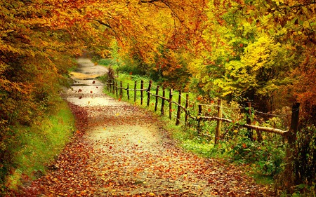 Autumn Path - colorful, grass, peaceful, tree, path, magic, red, amazing, forest, landscape, way, autumn, cute forest path, road, colors, splendor, nice, nature, trees, fall, woods, yellow, beauty, beautiful, lovely, foliage, pretty, green, lane, autumn colors, fence, leaves