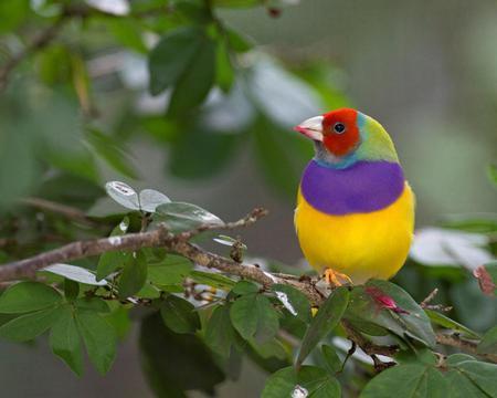 Bird - animal, colorful, tree, bird, leaves