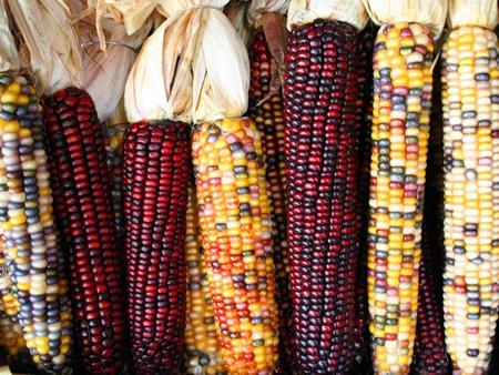 Colourful corns - colourful, food, colours, photography, corn, corns