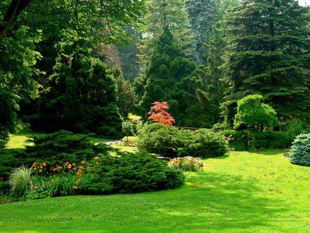 Sunny garden - Forests & Nature Background Wallpapers on Desktop ...