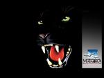 mataora-jaguar