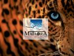 mataora leopard