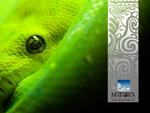 mataora-snake
