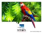mataora parrot