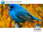 mataora-bird