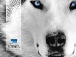 mataora-wolf