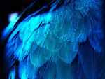 what a beautiful parrot's wings