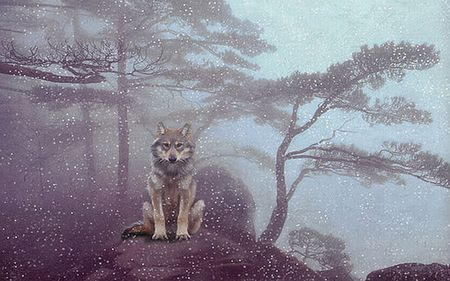Still Here - lobo, forest, woods, trees, mist, winter, photography, lone, nature, wolf, wolves