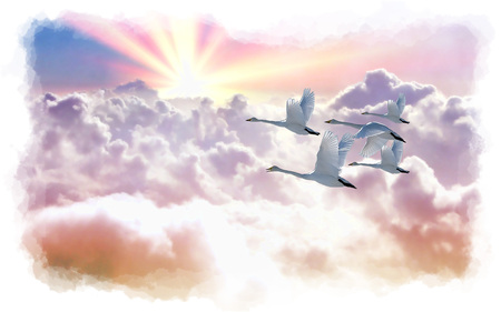 Sunrise Flight - bird, painterly, wide screen, sunrise, clouds, swan, 1680