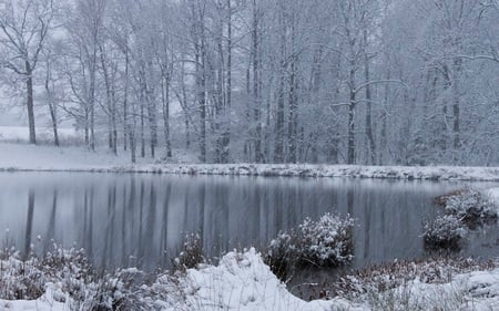 White Christmas - snow, forests, winter, beautiful, nature, pond