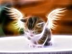 Angel Kitteh