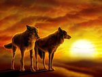WOLVES SUNSET