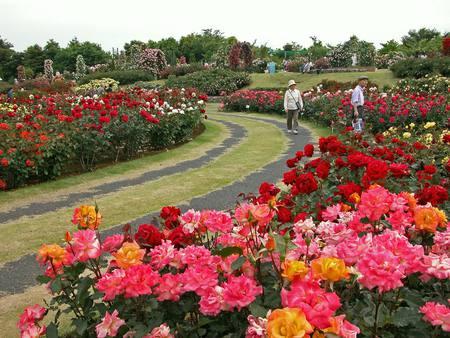 Rose Garden Amusement Parks Architecture Background Wallpapers