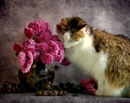 Alluring Fragrance - flowers, grapes, cat, pink flowers, vase