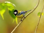 bird on a branch