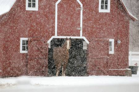 Snow Problem - snow, animals, horses, barn, winter