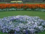Flowers Garden in England