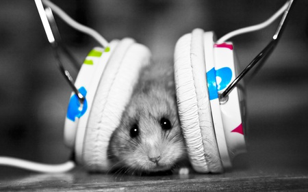 Animal Beat - cute, rodents, hamster, earphones, funny, animals
