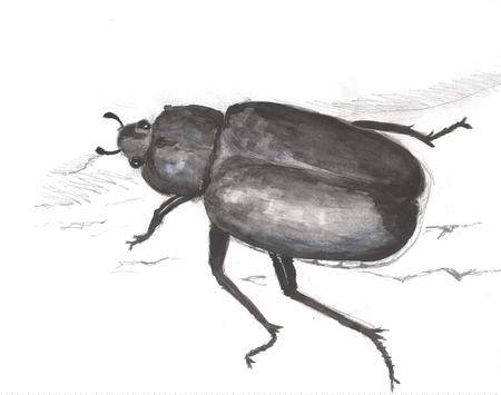 Eremit - Osmoderma Eremita - rose beetle, scarab, widescreen, eremit, wds, beetle, coleoptera, xxl, scaraboidea