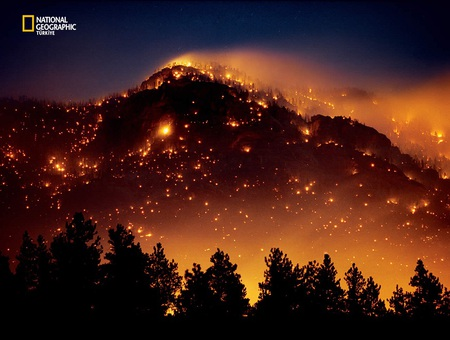Forest Fire Photography Abstract Background Wallpapers