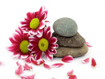 zen stones and daisies 2