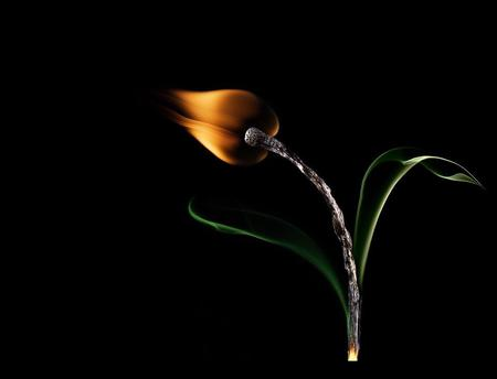 FLAME - flower, flame, match, abstract