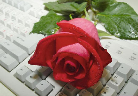 rose on the keyboard