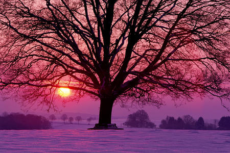 sunset - snow, sun, winter, trees, countryside