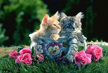 Картинки по запÑ€осу sweet kittens