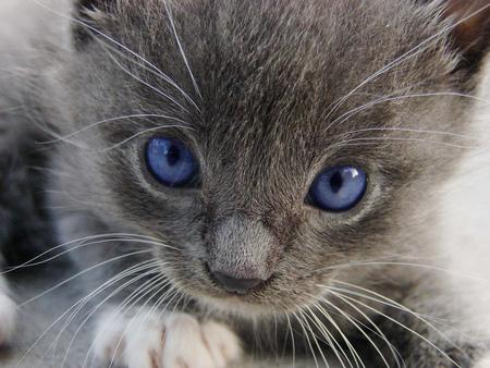 blue eyes - blue