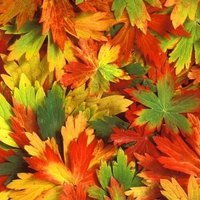 Colourful Leaves !!!