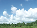 Cows under blue sky
